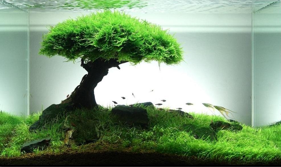 Как оформить аквариум своими руками