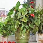 plantas-1