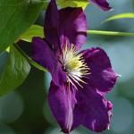 Лучшие сорта орхидей: посадка и уход