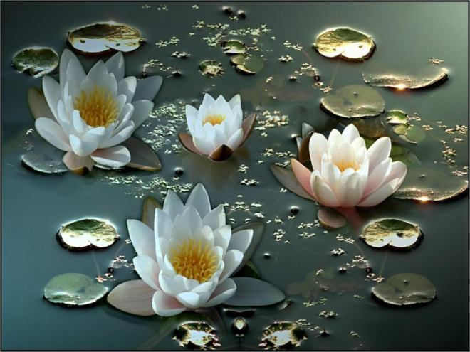 White_Water_Lillies_wwwWallpap