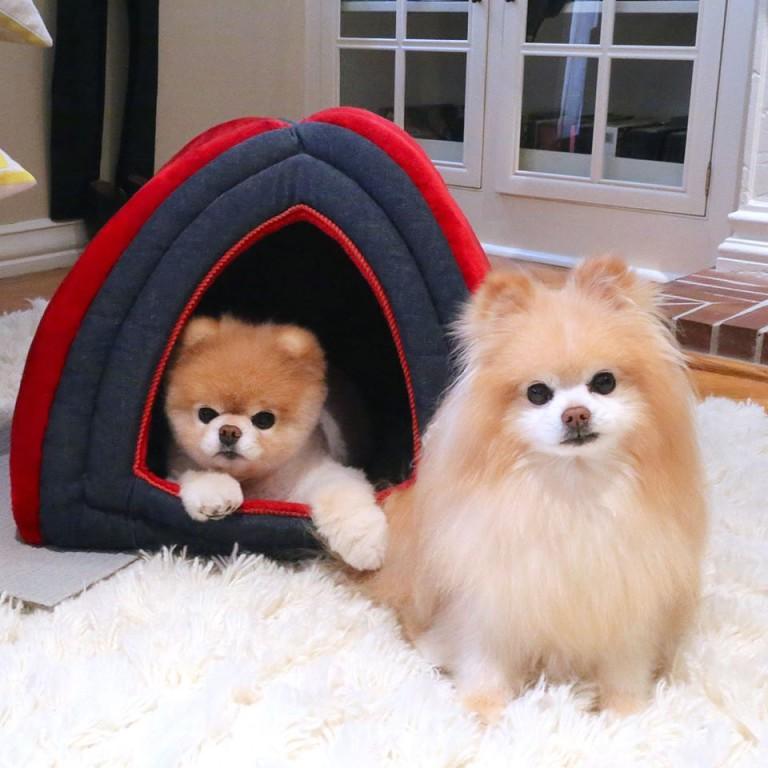 Мягкий, переносной домик для собаки